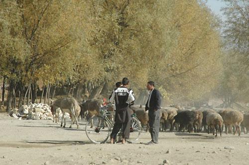 パラチ・バグマン村の大通りを羊の群れが行く。