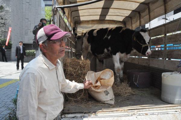 千葉県の元酪農家が乳牛を連れて応援に駆け付けた。「仲間が困っているのに黙っているわけにはいかねえ」。(26日正午ごろ、東電本店前:筆者撮影)