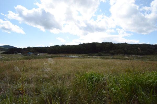水田は面影もないほど荒れ果てていた。(飯舘村。写真:筆者撮影)