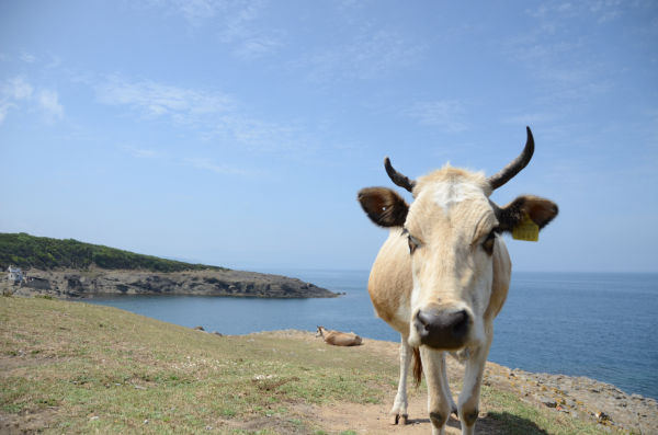 絵葉書のように長閑な海が広がるシノップ。対日本政府交渉では黒海の汚染について質問が出た。=2013年6月、インジェ岬 撮影:筆者=